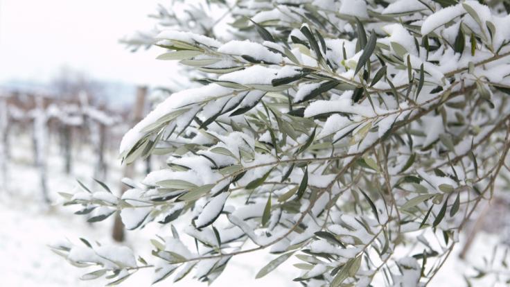 Griechenland droht Schnee und Eis. (Foto)