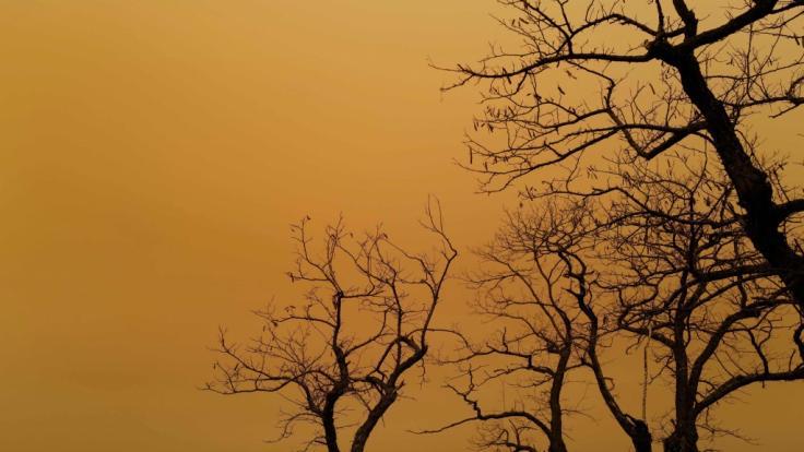 Schöne Grüße aus der Wüste: Sahara-Staub färbt den Himmel orange. (Foto)