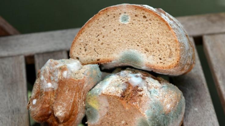 Ist verschimmeltes Brot noch genießbar oder nicht? (Foto)
