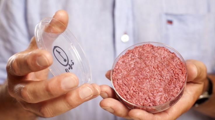 In-vitro-Fleisch wächst in der Petrischale aus tierischen Muskelzellen.