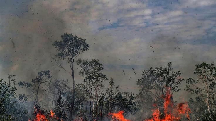 Regen könnte beim Löschen der Waldbrände helfen - doch es bleibt trocken. (Foto)