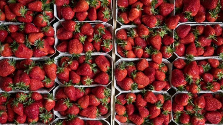 Eine Kundin machte in TK-Erdbeeren einen widerlichen Fund.