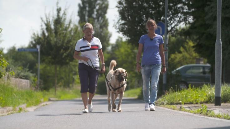 Der Hundeprofi - Rütters Team bei VOX