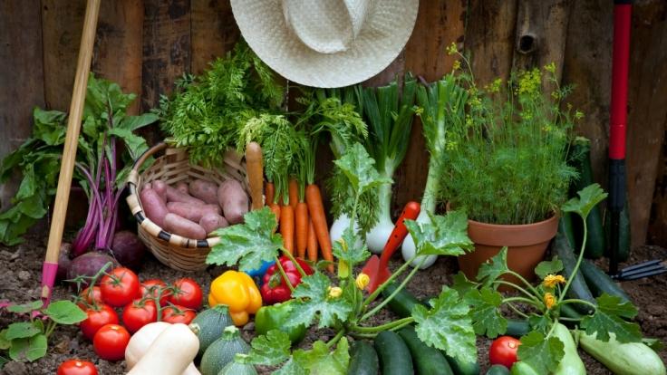 Bei Gartengemüse ist Vorsicht geboten.