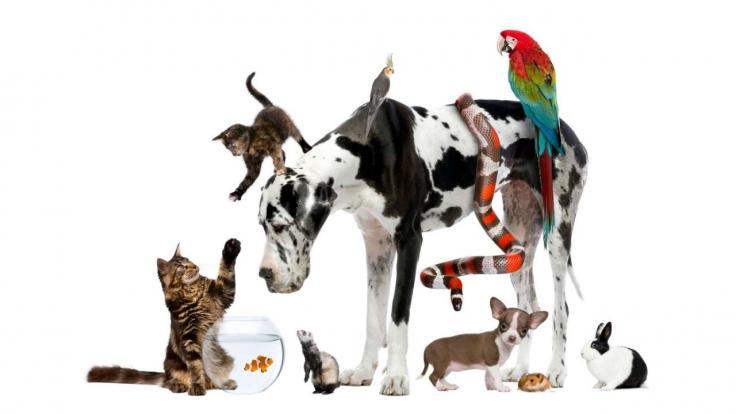 Tierische Überlebenskünstler bei Arte (Foto)
