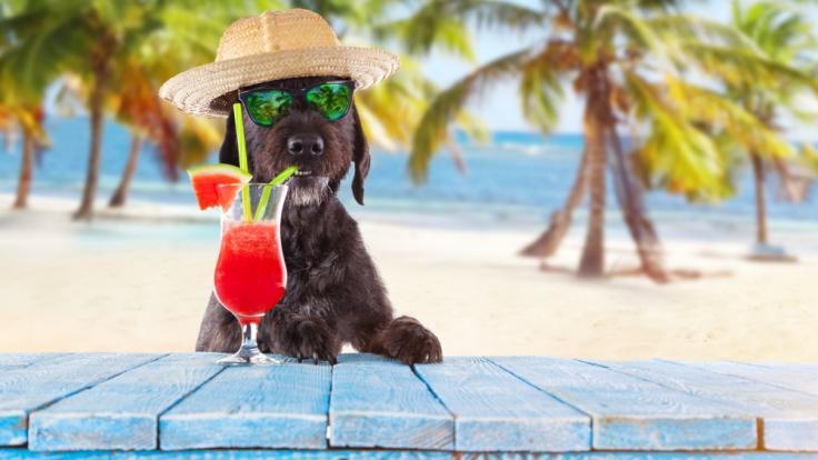 Fallen die Hundstage in diesem Jahr aus? (Foto)