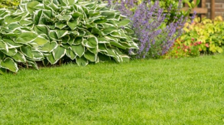 Saftig-grün, dicht und gesund: Ein gepflegter Rasen ist das Aushängeschild jedes Gartens. (Foto)