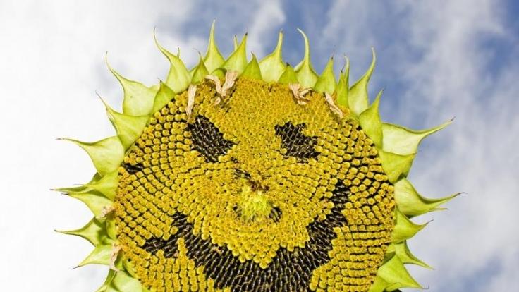 Ein Lächeln wirkt ansteckend. Probieren Sie es mal aus - heute, am internationalen Tag des Lächelns. (Foto)