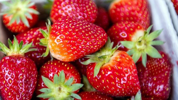 In einem Supermarkt bei Brisbane haben unbekannte Täter Erdbeeren mit Nadeln gespickt. Ein Familienvater bemerkte die Gefahr gerade noch rechtzeitig. (Foto)