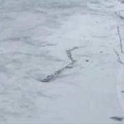 Ein isländisches See-Ungeheuer