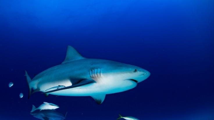 In Florida wurde ein halber Hai angespült (Symbolbild).