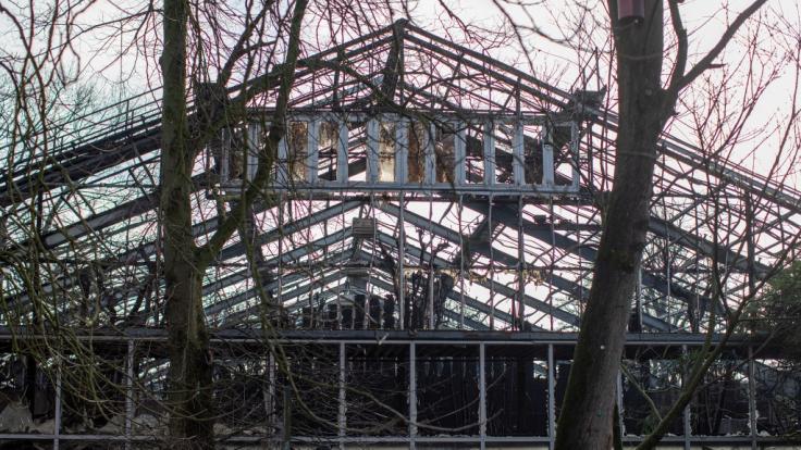 Das Affenhaus im Krefelder Zoo ist komplett abgebrannt.