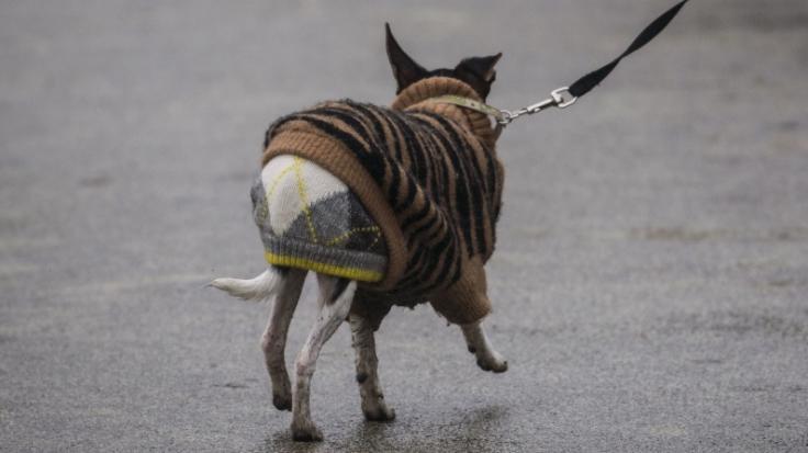In Thailand wurde ein Zyklopen-Welpe geboren. (Foto)