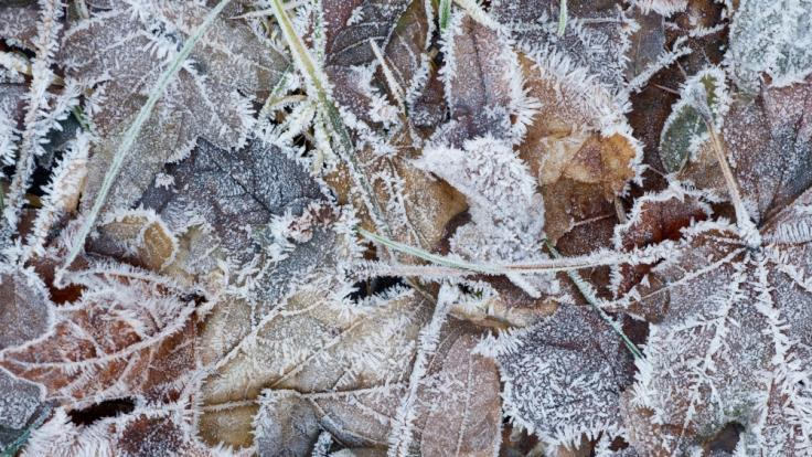 Frost könnte in Brandenburg und Bayern für Eisnebel sorgen.