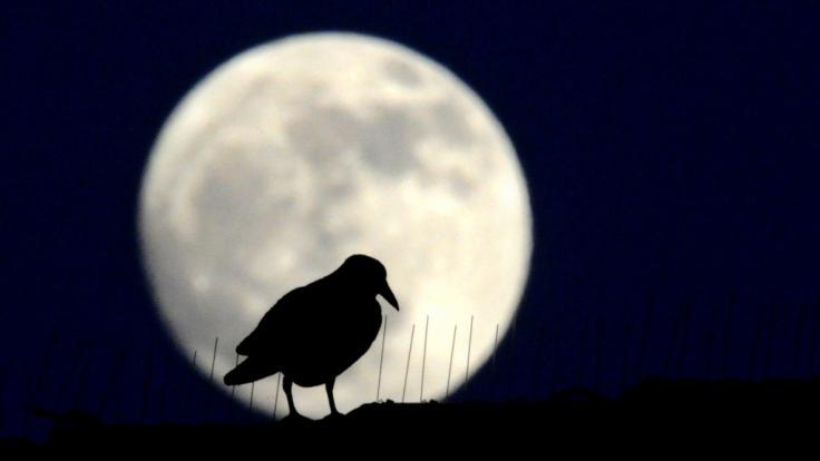 Im März erhellt der Krähenmond die Nacht. (Foto)
