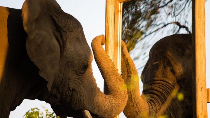 Wie Elefanten denken bei 3sat (Foto)