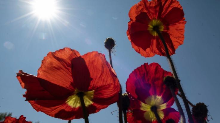 Deutschland könnte kurz nach Ostern schon im April der erste Hitzetag mit bis zu 30 Grad Celsius ins Haus stehen.