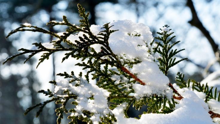 Nach eisigem Winterwetter sorgt ein Hoch nun für Tauwetter. (Foto)