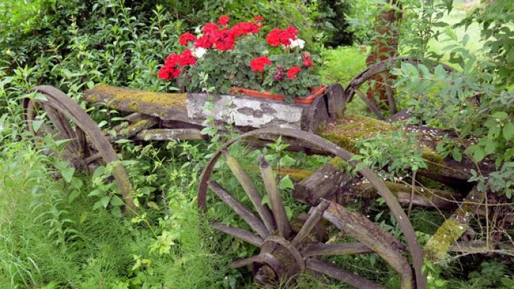 Der Frühsommer hält Einzug in die Gärten.