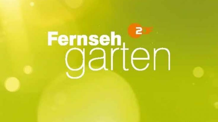 "Andrea Kiewel versüßt dem TV-Publikum den Sonntag mit dem ""ZDF Fernsehgarten"". (Foto)"
