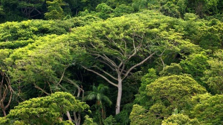 Unternehmen verschleiern mit Greenwashing das sie zum Beispiel den Regenwald abholzen.