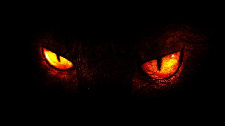 """Ein Exorzist warnt vor der """"Dämonenkatze"""" Pixel. Er ist sicher: Das Tier ist vom Teufel besessen (Foto)"""
