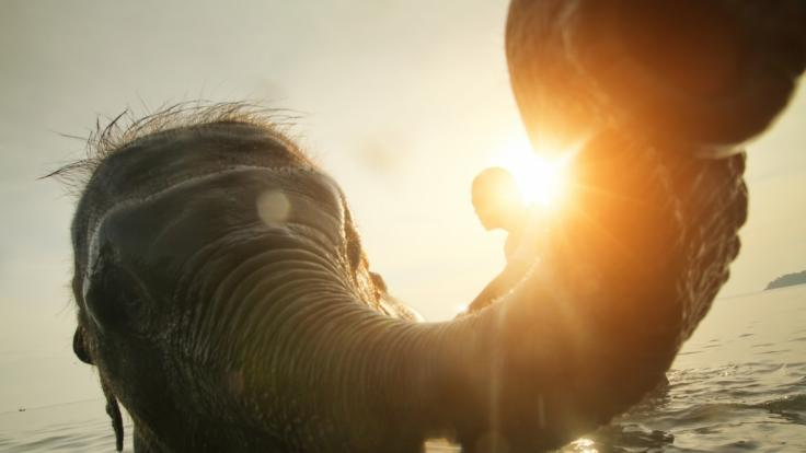 Eine Elefant begrapschte ein Playboy-Model.