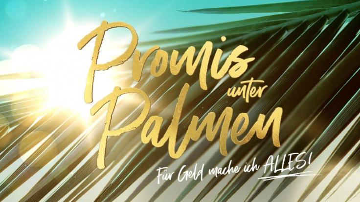 """Neuer Cast von """"Promis unter Palmen"""": So krass reagiert Twitter (Foto)"""