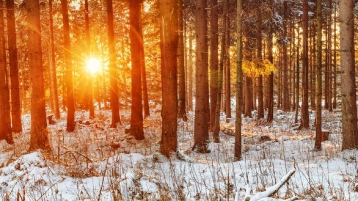 Wie das Wetter im Februar 2017 werden könnte, verrät der Hundertjährige Kalender.