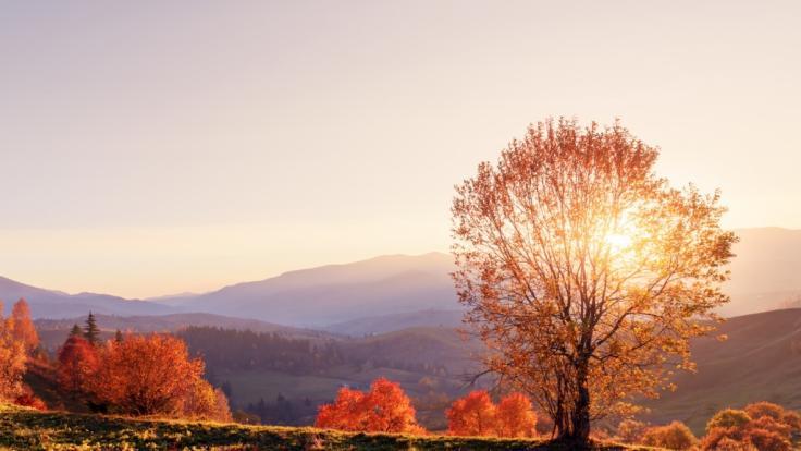 Können wir uns auf einen goldenen Oktober freuen?