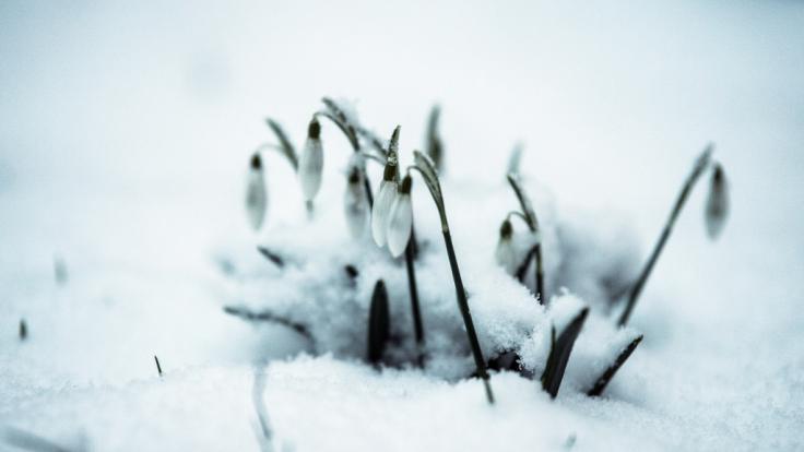 Kommt jetzt der Frühling?