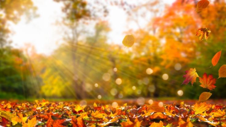 Steht uns ein heißer Herbst bevor? (Foto)