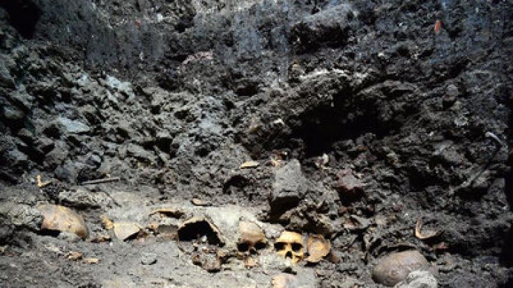 Die Überreste aus Menschenopfern bei Ausgrabungen nahe eines Azteken-Tempels. (Foto)