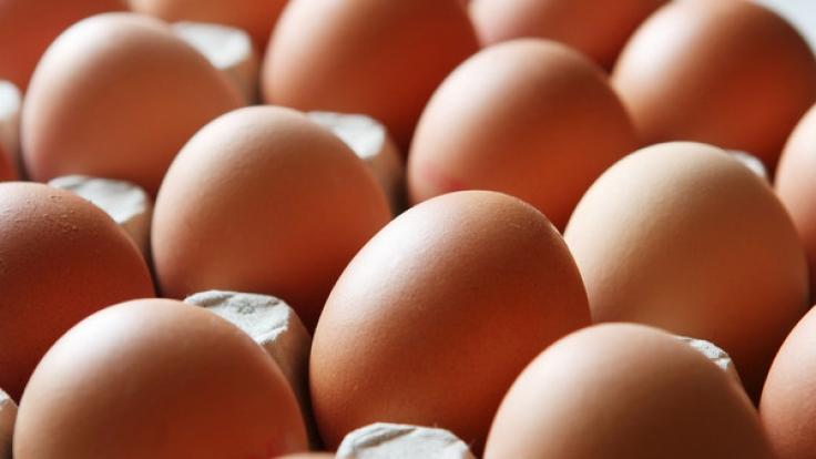 Lebensmittelwarnung! Eier der Firma Eifrisch sind von Salmonellen befallen.