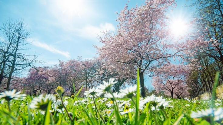 Kommen Sonnenanbeter im Mai voll auf ihre Kosten?