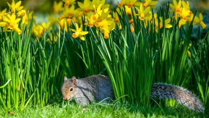 Bevor der Frühling in Deutschland Einzug hält, sorgt Tief