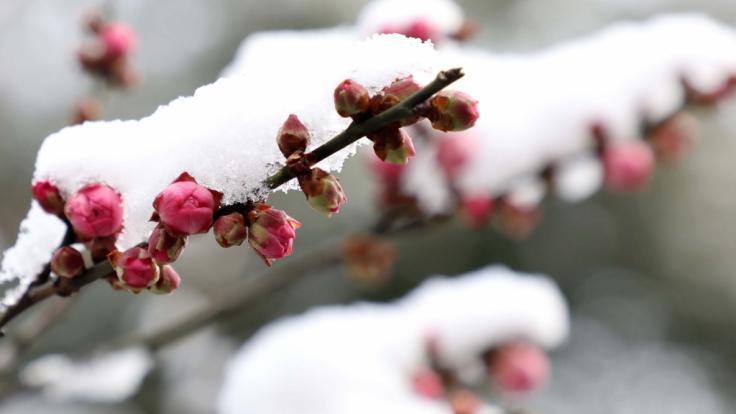 Gibt es nun bald deutschlandweit Schnee? (Foto)