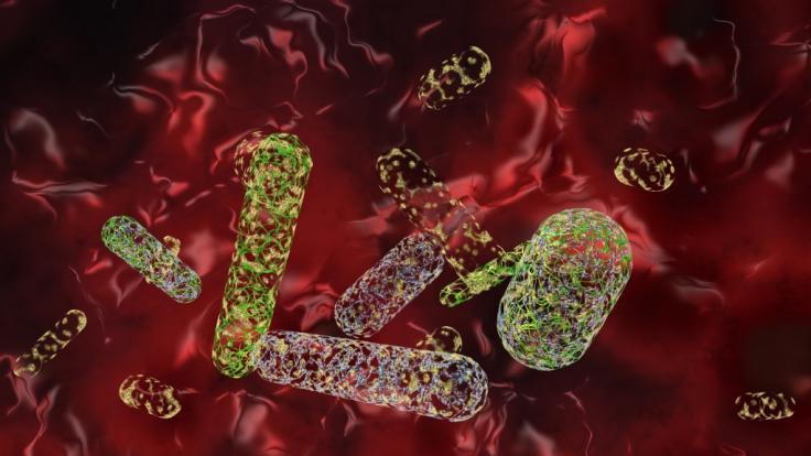 """Können die Erreger der """"Zombie""""-Krankheit auch dem Menschen schaden? (Symbolbild) (Foto)"""