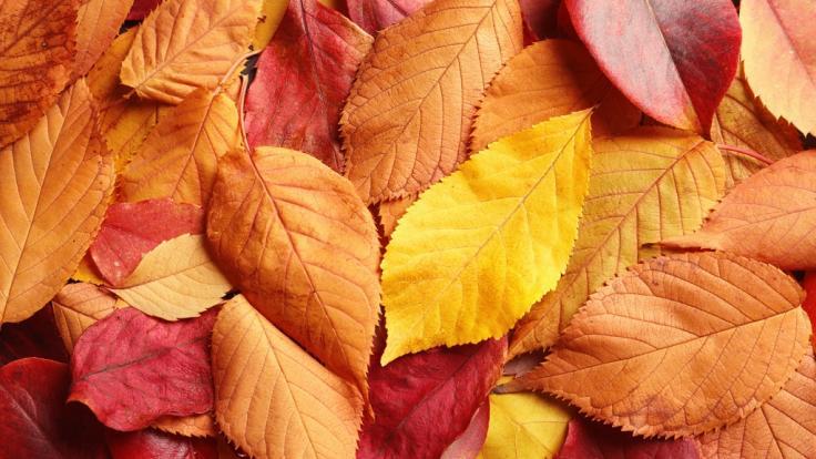 So schöne Farben und doch so tödlich. (Foto)