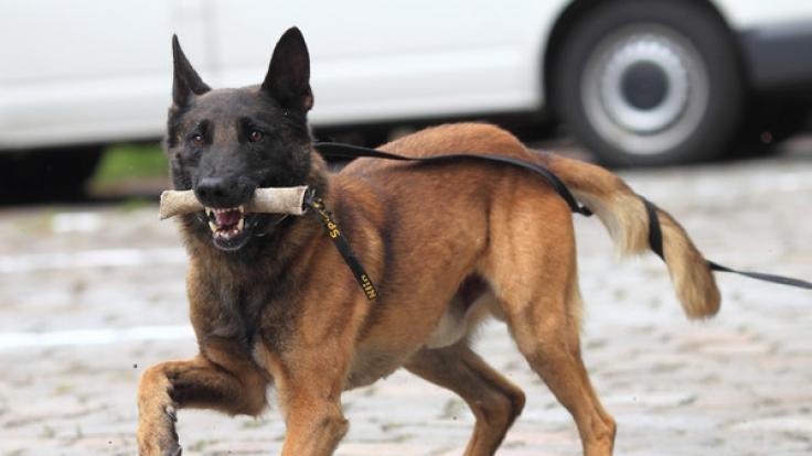 Bei der Bundespolizei arbeiten rund 40.300 Mitarbeiter und zirka 600 Diensthunde. (Symbolbild)
