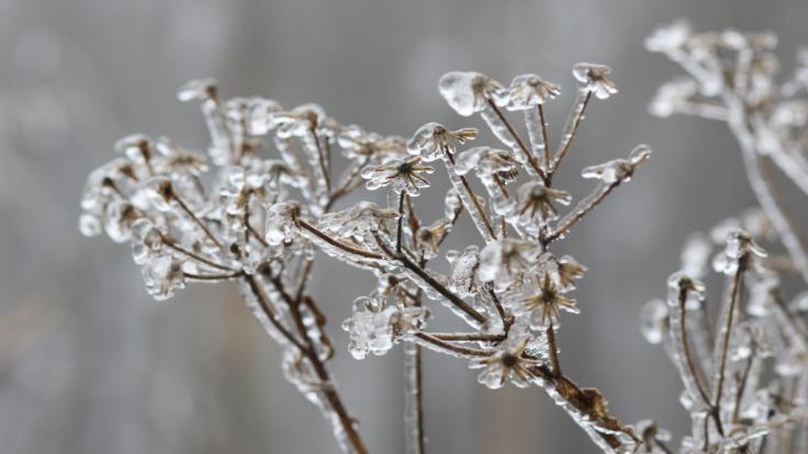 Stehen Deutschland weiße Weihnachten 2018 bevor - oder bleibt der Schnee im Dezember aus? (Foto)