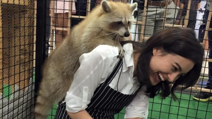 """Im Café """"Harry"""" gibt es sogar Kuschel-Waschbären. (Foto)"""