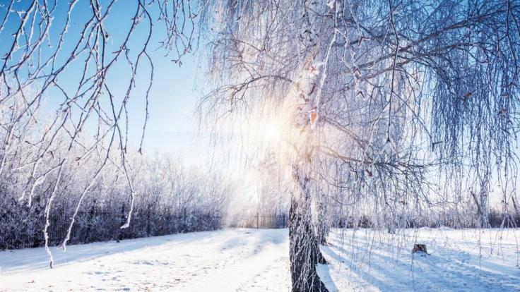 Erwartet uns ein strenger Winter?