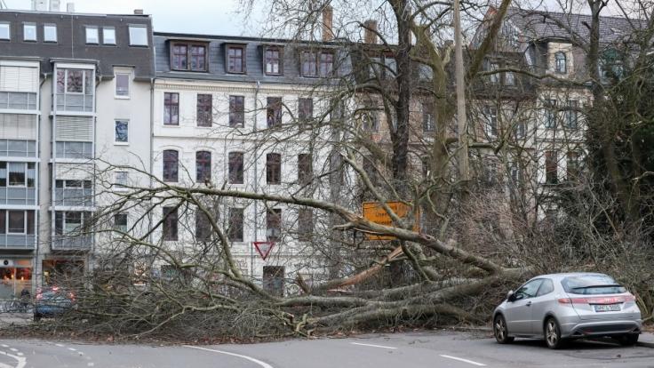 Sturm Friederike riss vielerorts Bäume aus. (Foto)
