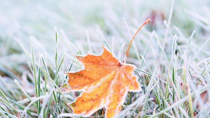 Frost. (Foto)