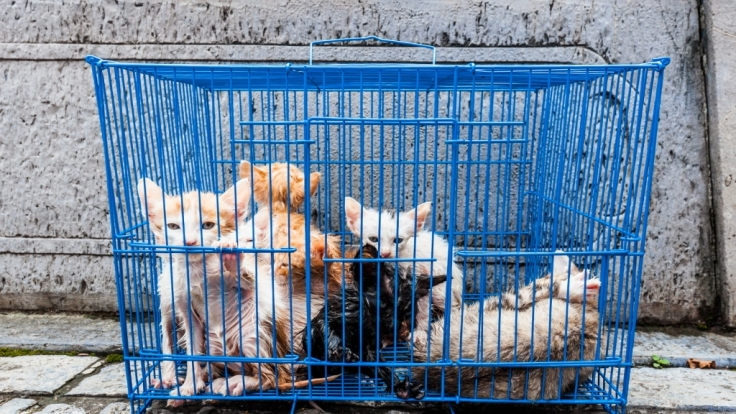 Diese Strafen drohen Tierquälern.