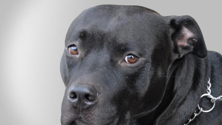Tierquälerei: 10 Jahre Knast! Wegen Sex mit einem Hund   news.de