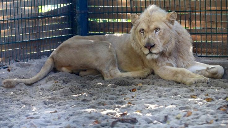 Die Motive des Zoobesuchers sind weiterhin unklar.