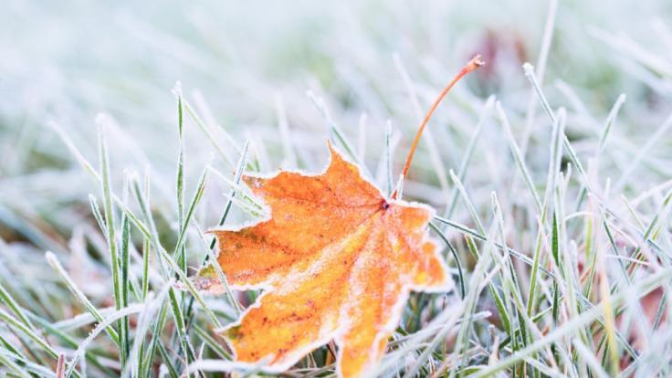 Wetterdienst warnt vor Luftfrost.