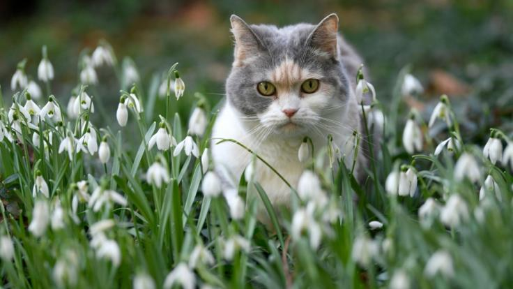 Auf Zypern hatte eine Katze in Not den richtigen Riecher und wurde bei der örtlichen Polizei vorstellig. (Foto)